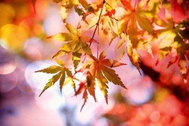 秋 紅葉 落ち葉 絵