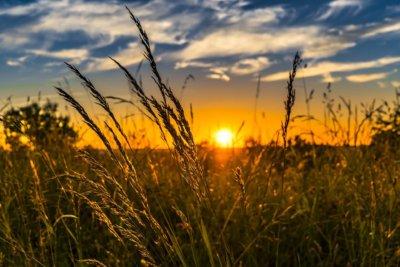 秋の風景 ライ麦畑でつかまえて 癒しの画像